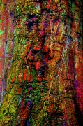 photo nature morte nature abstrait peinture : Tree art 4